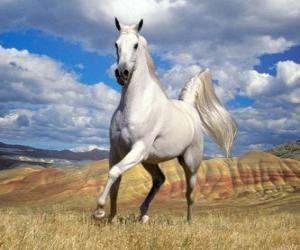 Image result for ασπρο άλογο