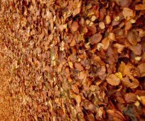 Puzzle πεσμένα φύλλα στο έδαφος, μια